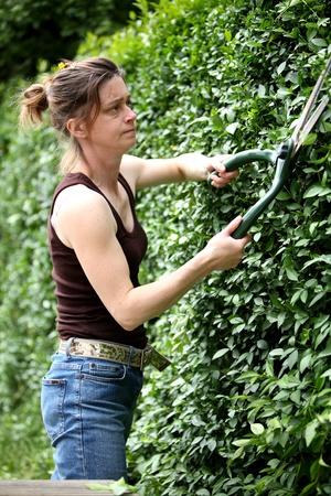 Jeune femme qui d�coupe la haie avec une paire de ciseaux jardin Banque d'images