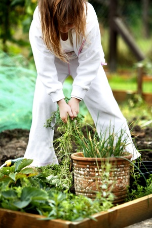 Young child helping pulling weeds out of the garden Stock Photo - 9022128