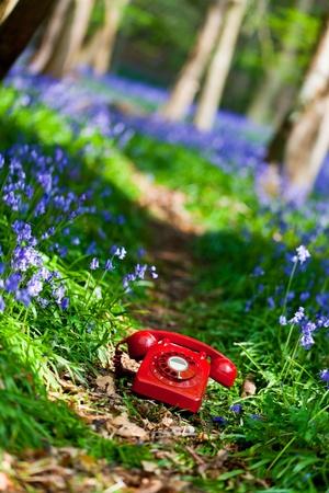 UK r�tro t�l�phone rouge sur un sentier entre une for�t de campanules