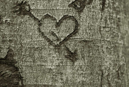 bark carving: Heart carved in a tree Stock Photo