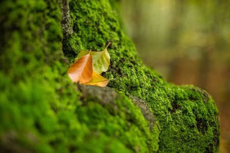 intact: Intact moss and autumn leaves