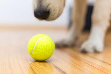 behaviorism: Dog playing with ball Stock Photo