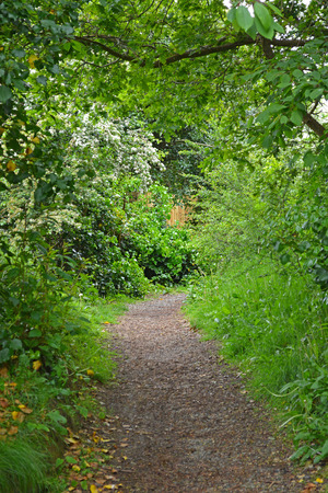 Country Walk and Lush Summer Foliage