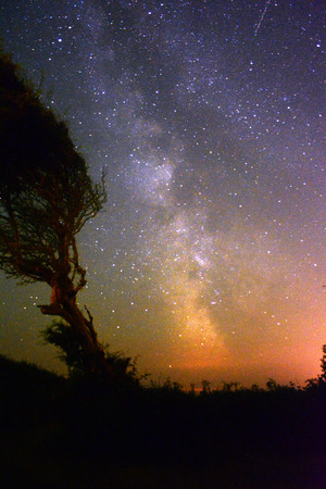 Milky Way and Windswept Tree