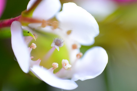 Soft White Flower Macro