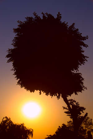 Silhouette of a tree against the setting sun photo