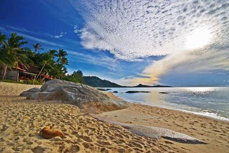 Sunrise Beach with lying Dog photo