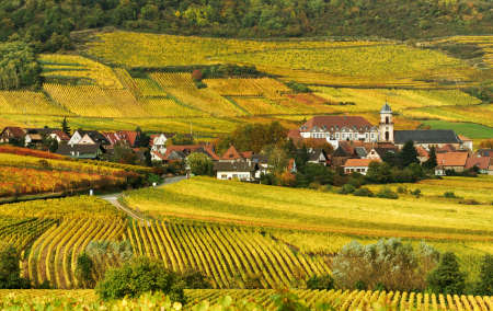 wine road: Autumn Vineyard in France