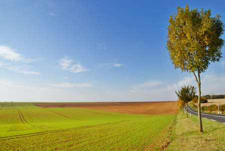 Cultivated land in early autumn photo