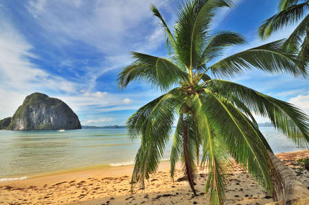 bounty: Bounty Tropical Paradise Beach with Palm Stock Photo