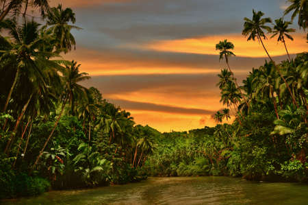 africa jungle: Rainforest river cruise in sunset light Stock Photo