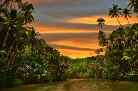 Rainforest river cruise in sunset light Stock Photo