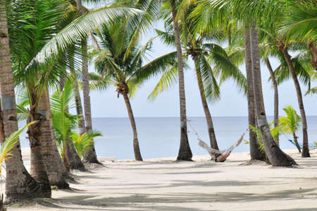 Tropical Palm beach with Hammock Stock Photo - 4367892