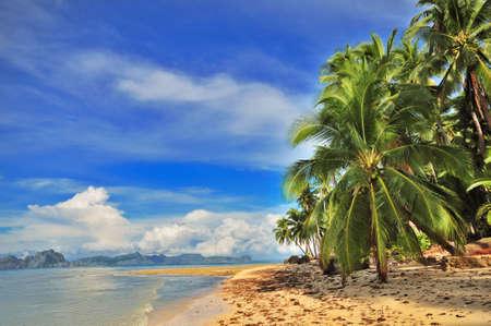 swaying: Beach Tropical Exotic Getaway Paradise