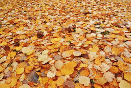 Colorful Autumn Fallen leaves background Stock Photo - 4595410