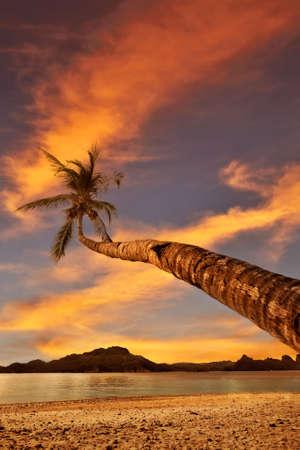 bounty: Palm Beach Sunset in Dream bounty destination