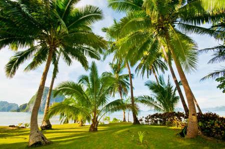 palawan: Ex�ticas Palms Beach Resort Grounds
