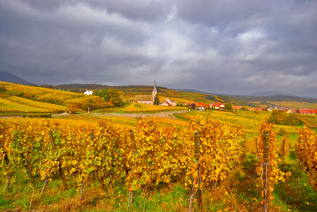Fall Vineyard with Village in the Background Stock Photo - 5327111