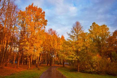 Walking in Autumn Park after Rain photo