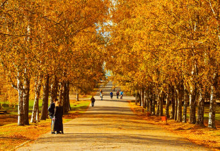 Vivid Trees in Autumn Park Stock Photo - 5327120