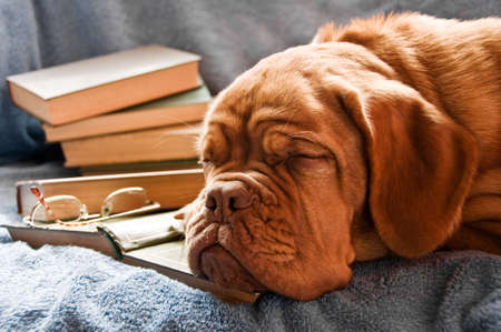 Dog Fell Asleep in Pile of Books photo