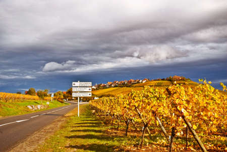 alsace: Wine Route in Alsace of France