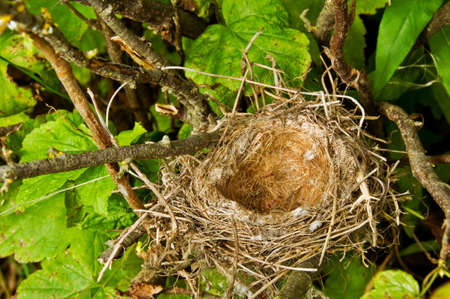 bushes: Birds Nest Hidden in a Tree