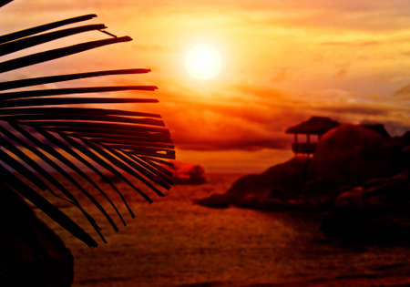 Sunset Bungalow behind the Silhouette of Palm Leaf photo
