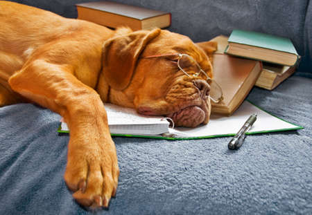 exams: Dog Sleeping in her Notebook after Studying