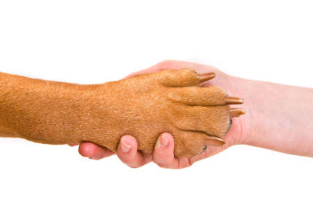 Shaking hands with an animal - in agreement with the environment photo
