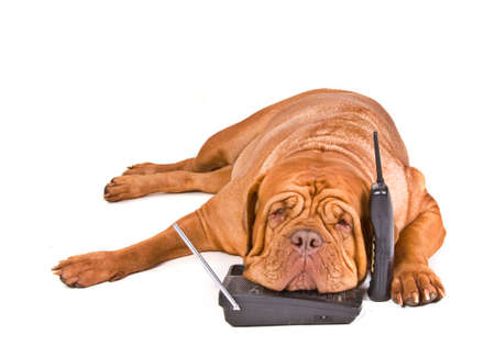 ear phones: Big Dog is tired of long phone calls