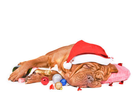 Santa Dog Sleeping with a Bottle of Champagne on Christmas Eve photo