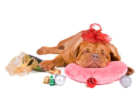 french mastiff: Dreams of Merry Christmas and a Happy New Year