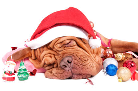 hat new year happy new year festive: Pretty dog felt asleep with Christmas deorations Stock Photo