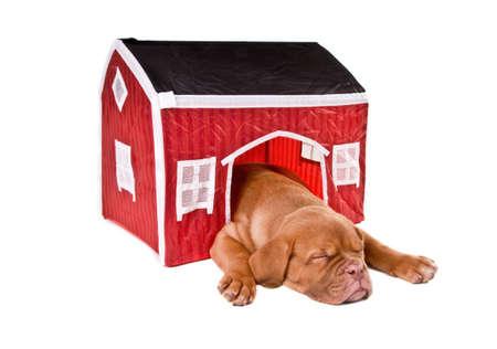 casa de perro: Perro durmiendo en su peque�a casa Foto de archivo