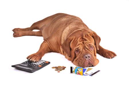 contando dinero: No hay suficiente dinero para pagar deuda de tarjeta de cr�dito de Out  Foto de archivo