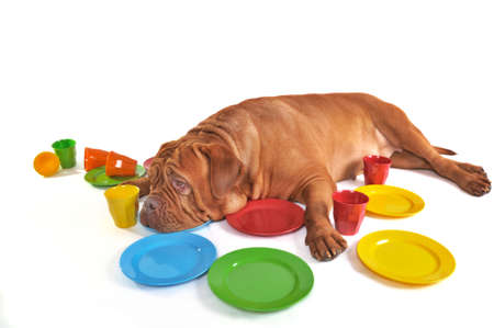 fedup: Dog is very tired of washing a lot of dishes