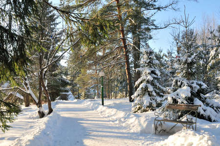 Park with a bench on a sunny winter day. Archivio Fotografico