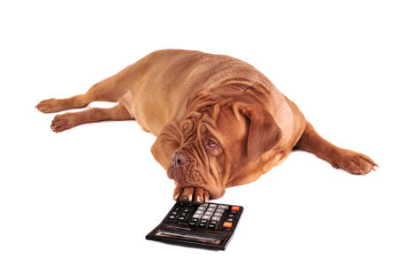 Dog is full of thoughts of its accounting photo