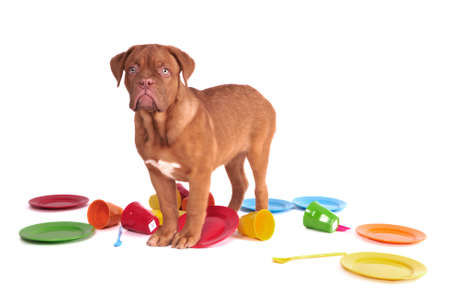 fedup: Dog caught in a kitchen among colorful plates Stock Photo