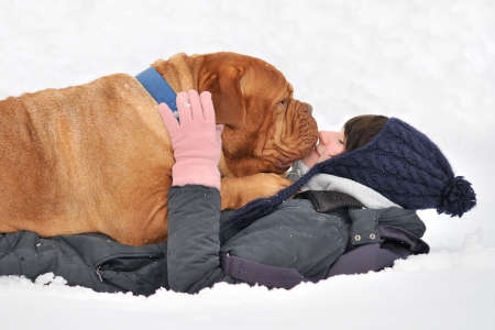 female boxer: Huge Playful Dog and her Master happily lying in Snow
