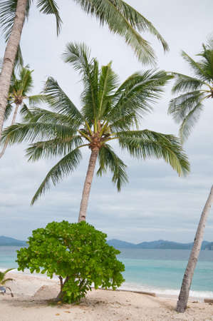 palm trees on the beach Stock Photo - 6991937
