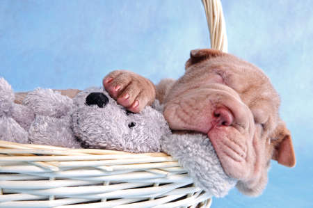 pall: Cute puppy having a comfy sleep in a basket