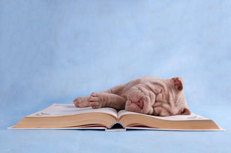 Puppy sleeping sweetly on an open book photo