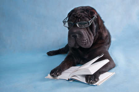 Serious Black Dog Reading a Book photo
