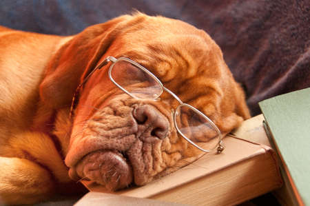 clever dog with glasses sleeping over an interesting book photo