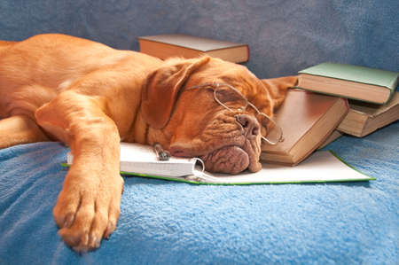 handsome pretty dog asleep after hours of studying photo
