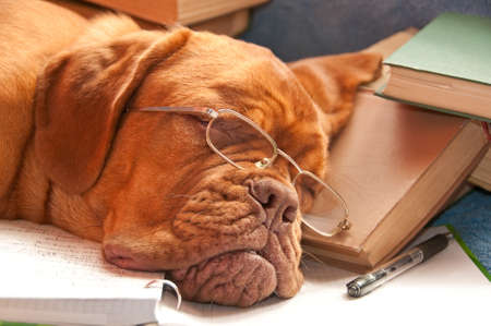 dog school: tired dog sleeping over a finished report Stock Photo