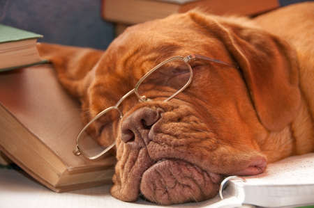 tired dog sleeping over a college books photo