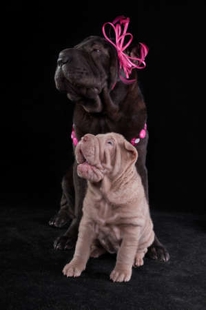 Happy Dog Friends - Big and Small photo
